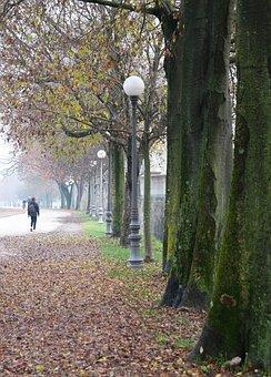 Trees, Road, Winter, Walk, Fog, Day, Walkway, Italy