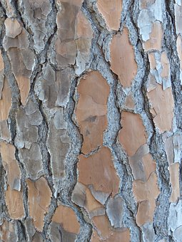 Bark, Tree, Trunk, Texture, Wood, Brown, Rough, Surface