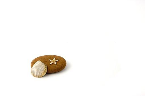Star, Fish, Stranded, Beach, Water, Shore, Shellfish