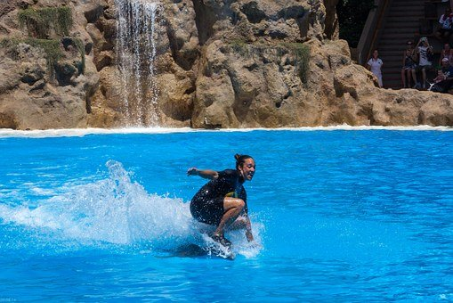 Dolphin Ride, Woman, Trainer, Dolphin, Show, Water