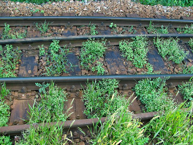 Rails, Overgrown, Railroad Tracks, Track End, Nature