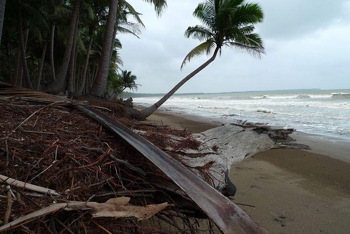 Beach, Tropics, Erosion, Palm, Palawan, Philippines