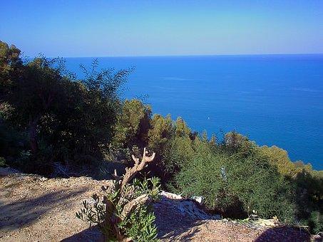 View, Sea, Mediterranean Sea, Shrubs, Sidi Bou Said