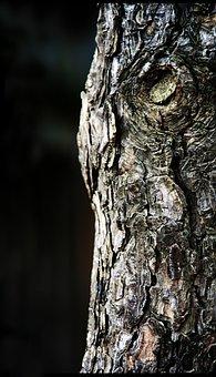 Trunk, And Thu, Wood, Nature, Bark