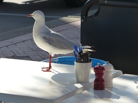 Seagull, Dining Seagull, Gull, Bird, Fly, Wings