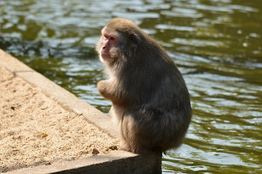 Crackers, Monkey Business, Zoo, Series, Monkey, Monkeys