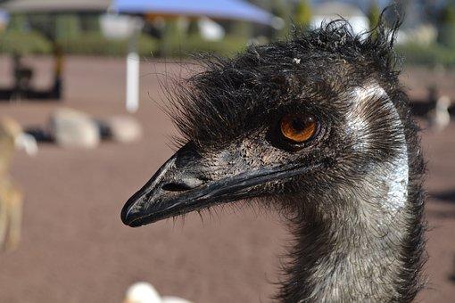 Ostrich, Head, Bird, Zoo, Animal