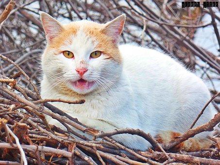 Sly Cat, Overviews, Teeth Felan