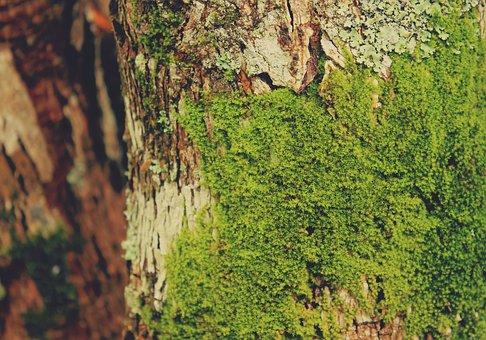 Moss, Soft, Velvet, Natural, Bark, Tree, Texture