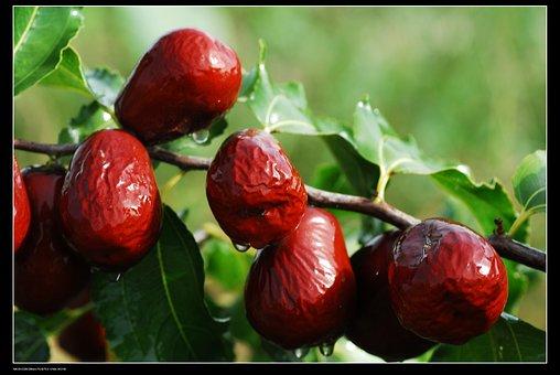 Jujube, Red Dates, Xinjiang Jujube, Food