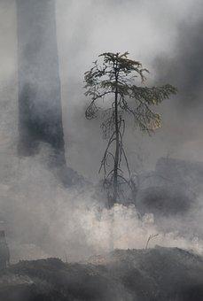 Forest Fire, Conservation, Burning For Conservation