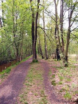 Trail, Forest Path, Path, Walk, Spring, Moor, Raakmoor