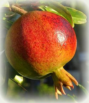 Pomegranate, Fruit, Ripe, Red, Healthy, Market, Food