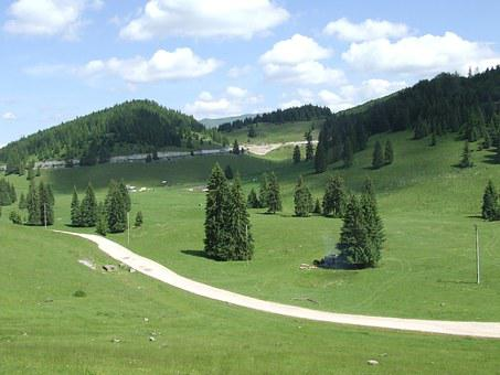 Transylvania, Padis, Forest, Plateau, Nature, Field