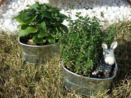 Small Garden, Urban Agriculture Festival, Rabbit