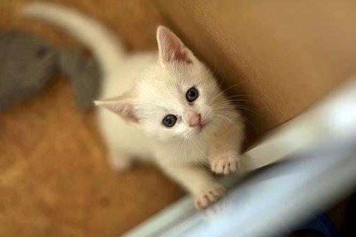 Kitten, Solid White Cat, Motherless Child