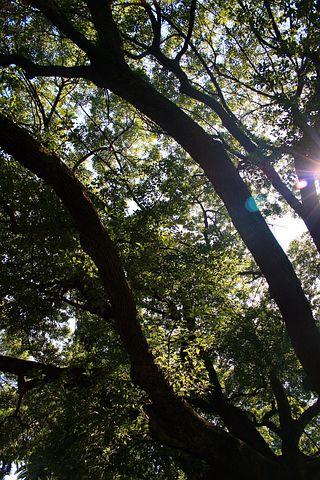 Oak Tree, Tree, Oak, Large, Spread Out, Sun, Focus