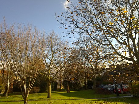 Park, Garden, Worcester, England, Trees, Urban
