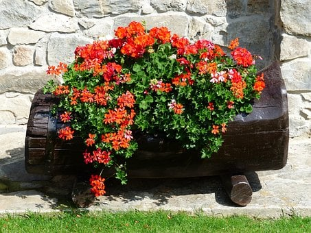 Flowers, Red, Orange, Balcony Plant, Container Plant