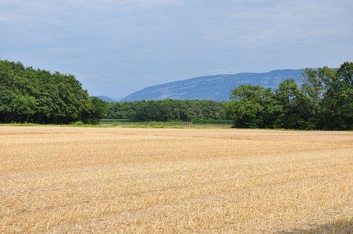 Fields, Rural, Countryside, Laconnex, Geneva, Landscape