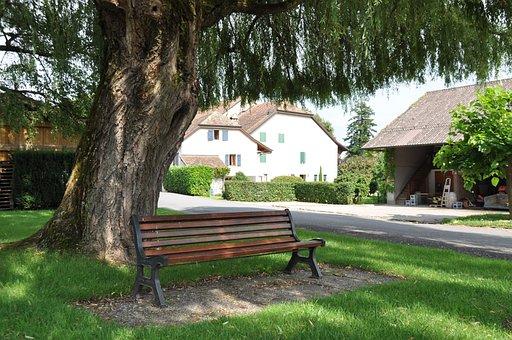 Park Bench, Bench, Seat, Tree, Laconnex, Geneva