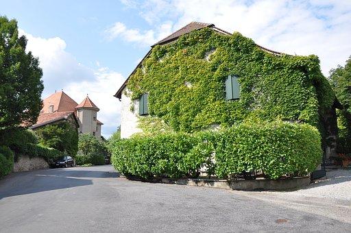 Laconnex, Village, Geneva, Ivy, House, Climbing Plant