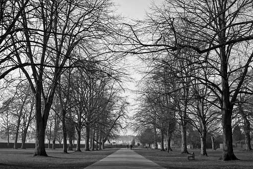 Parks, Trees, Black And White, Paths, Pathways, Roads