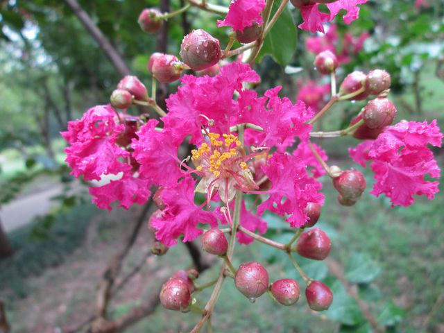 Embankment Angle, Park, Flower, Garden, Plant