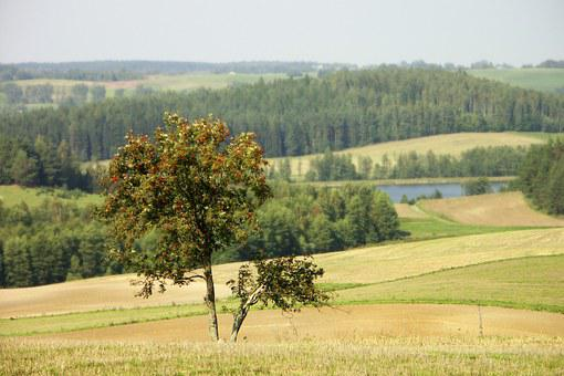 Nature, Landscape, Tree, Rowan, Lake, Forest, Meadow