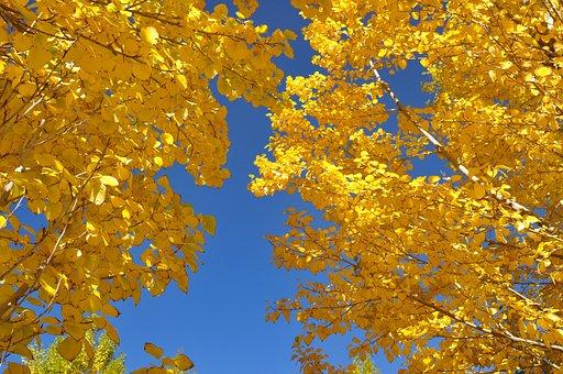 The Leaves, Autumn, Huai Yang, Color, Sky, Gold