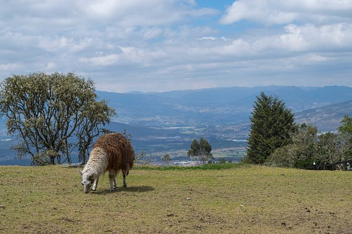 Colombia, Nature, Environment, Prairie, Animal, Grass