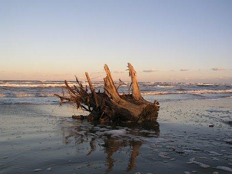 Trunk, Sea, Summer, Beach, Rimini, Winter, Horizon