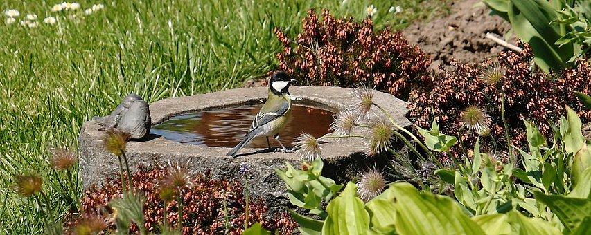 Bird, Bird Bath, Titmouse, Expensive, Spring, Natural