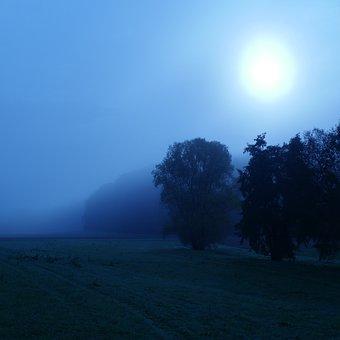 Trees, Forest, Sun, Fog, Haze, Weird, Ghostly, Field