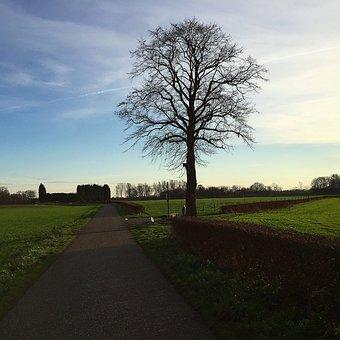 Road, Tree, Village, Nature, Landscape, Forest, Sky