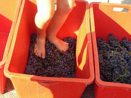 Grape Harvest, Feet, Verona, Grape, Stomping, Stampers