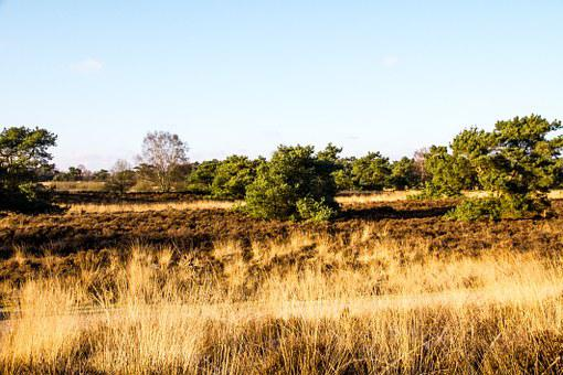 Steppe, Pasture, Nature, Trees, Landscape, Grasses, Sky