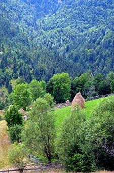 Pasture, Fir Trees, Capita Fan, The Apuseni Mountains