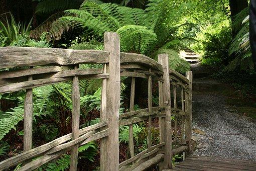 Bridge, Wooden, Plants, Ferns, Paths, Brown, Woods