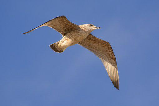 Baltic Sea, Seagull, Stolp Opening