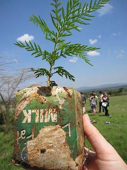 Kenya, Mara, Tree Planting, Maasai