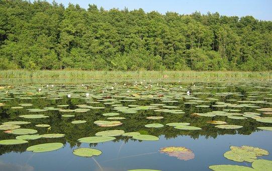 Müritz, Lake, Nature, Nature Conservation, Water