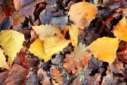 Leaves, Autumn, Fallen, Moldy, Wet