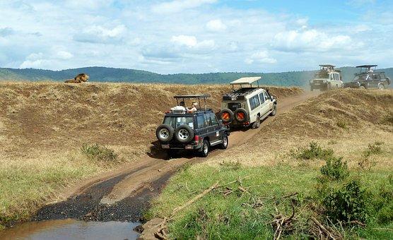 Safari, Wildlife Watching, Jeep, Lion, Off Road