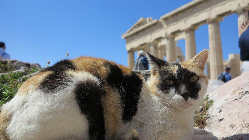 Cat, Acropolis, Temple