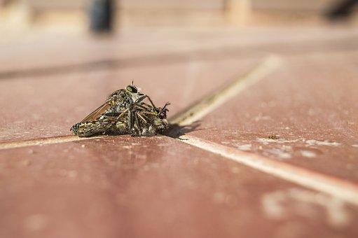 Asílido, Fly, Murderess, Tomorrow, Couple, Soil