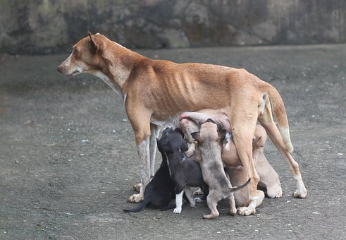 Dog Mother, Motherly Love, Dog