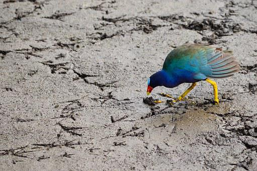 Bird, Eat, Wild, Animal, Wildlife, Eating