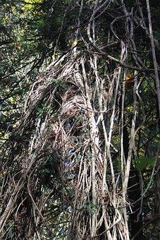 Branch, Muir Woods, Nature, Outdoors, Park, Green