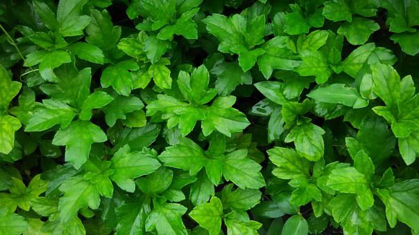 Nature, Green, Monsoon, Natural, Garden, Leaf, Forest
